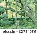 宝泉院のお庭 82734056