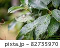 水滴と雨後の緑葉 82735970