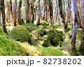 白駒池湖畔の苔むす原生林 82738202