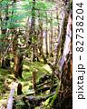 白駒池湖畔の苔むす原生林 82738204