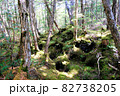 白駒池湖畔の苔むす原生林 82738205