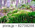 白駒池湖畔の苔むす原生林 82738208