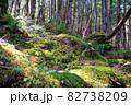 白駒池湖畔の苔むす原生林 82738209