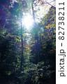 白駒池湖畔の苔むす原生林 82738211