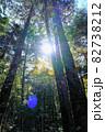 白駒池湖畔の苔むす原生林 82738212