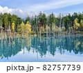 北海道美瑛 白金青い池 82757739