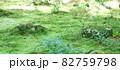 大原三千院のわらべ地蔵 82759798
