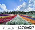 北海道 四季彩の丘 秋を迎える花畑 82760627
