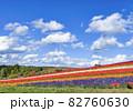 北海道美瑛 四季彩の丘 秋を迎えた花畑 82760630