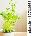 豆苗の再生栽培 82788668