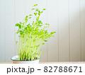 豆苗の再生栽培 82788671