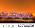 夜桜 星 ライトアップ(群馬県) 82788836