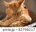 すだれの上で毛繕いする猫 82798217