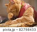 口に手を当てる猫 82798433