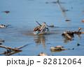 秋、水浴びするタカブシギ03 82812064