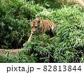 小虎 (東京) 82813844