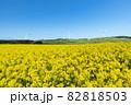 【青森県横浜町】北国の春、下北半島では菜の花が満開 82818503