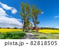 【青森県横浜町】北国の春、下北半島では菜の花が満開 82818505