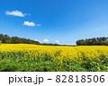 【青森県横浜町】北国の春、下北半島では菜の花が満開 82818506
