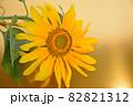 夏に元気に咲く大輪の黄色いひまわりの花金色バックで 82821312