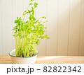 豆苗の再生栽培 82822342