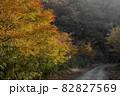 紅葉した木々に覆われた山道 82827569
