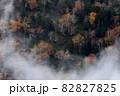 【北海道上富良野町】十勝岳凌雲閣・美しき朝霧とダケカンバの黄葉 10月 82827825