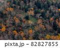 【北海道上富良野町】ダケカンバの紅葉と十勝岳 10月 82827855
