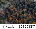 【北海道上富良野町】十勝岳・いぶし銀のダケカンバの紅葉 10月 82827857
