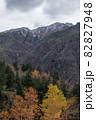 【北海道上富良野町】十勝岳の初冠雪と紅葉の風景 10月 82827948