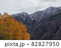 【北海道上富良野町】黄葉と初冠雪の十勝岳 10月 82827950
