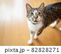 床の上で見上げる猫 82828271