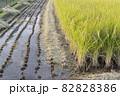 収穫中の田んぼ(秋、日本) 82828386