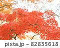紅葉 82835618