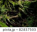 生命力 『和風イメージ』 (京都) 82837503