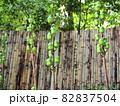 不思議な植物 『和風イメージ』(京都) 82837504