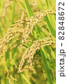 秋の稲 82848672