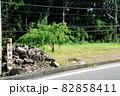長篠城の搦手門趾(愛知県新城市) 82858411