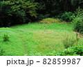 長篠城の野牛郭趾(愛知県新城市) 82859987