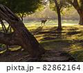 【奈良公園】朝日が射し込む春日野園地 82862164