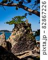 松の木と岩場 82867226