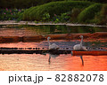 瓢湖の夏 82882078