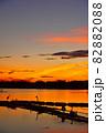 瓢湖の夏 82882088