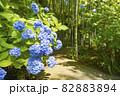 明月院 あじさいの花と竹林 82883894
