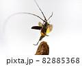 飛び立つキホシカミキリムシ 82885368