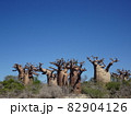 【マダガスカル】太っちょバオバブの森の景色(アンダバドアカ) 82904126