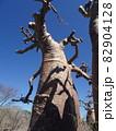【マダガスカル】ユニークな形をした太っちょバオバブの木(アンダバドアカ) 82904128