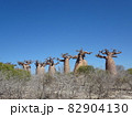 【マダガスカル】太っちょバオバブの森の景色(アンダバドアカ) 82904130