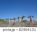【マダガスカル】太っちょバオバブの森の景色(アンダバドアカ) 82904131