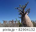 【マダガスカル】太っちょバオバブの森の景色(アンダバドアカ) 82904132